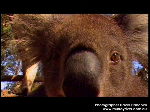 Murray Darling River Animals The Murray-darling River